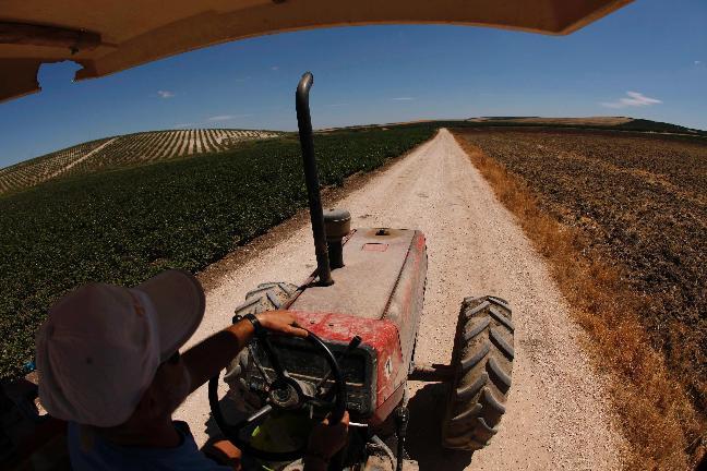 Marinaleda. Un agricoltore di cooperativa guida un trattore in un campo