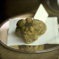 Tartufi: dal Piemonte un regalo al Papa, dalla Germania una scoperta scientifica che fa di quel dono una gaffe