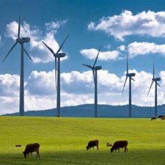 """Qui Rotterdam: l'Olanda lancia un'idea agli italiani. """"Autorizzate costruzioni di impianti per le energie rinnovabili e risanate il debito"""""""