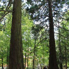 Tra le sequoie ignote di Pavullo nel Frignano, la California dei colli emiliani