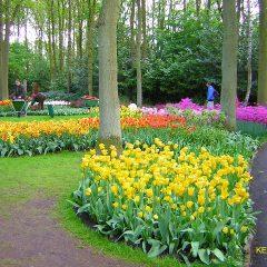 Amsterdam: riapre i battenti Keukenhof, il parco floreale più bello del continente