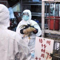 Il virus dell'aviaria torna a mietere vittime, presentandosi in Oriente sotto nuove vesti. Come, purtroppo, avevo previsto dieci anni fa