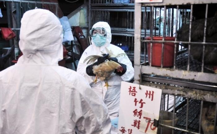 Nuova influenza aviaria, è allerta in Cina.