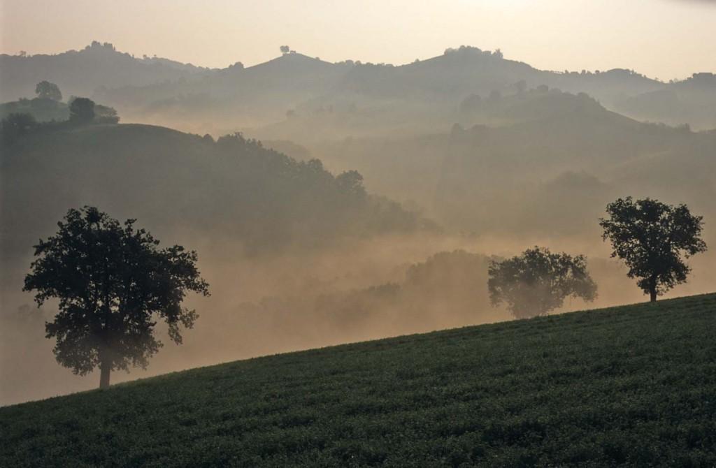 Rugiada di mattina tra Osimo e Montefano