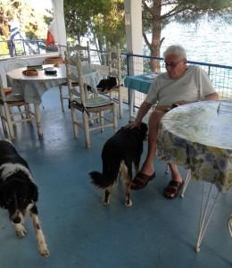 Chrisi Akti Panagias (Grecia). Mario Cervi con i cani Golia (il barboncino che vive con lui a Milano), Rocky e Mavrula (bivaccano in villa quando lui è in Grecia) e la gatta Switch.