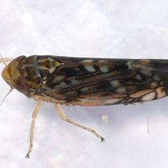 Micro-vibrazioni e confusione sessuale al posto della chimica contro gli insetti dannosi