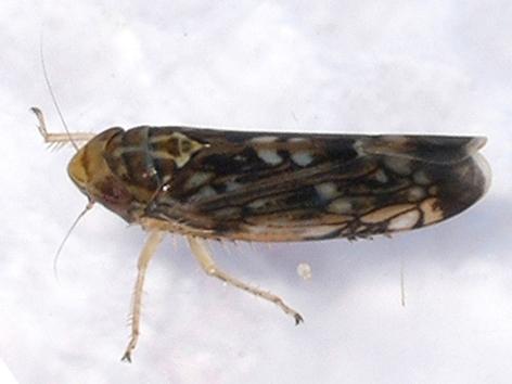 microvibrazioni-insetti