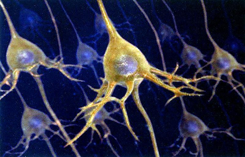 Giacomo-Rizzolatti-neuroni-specchio