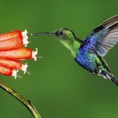 """Buone pratiche, cultura al centro e ambiente """"in Rete"""": la svolta francese nel segno del colibrì"""