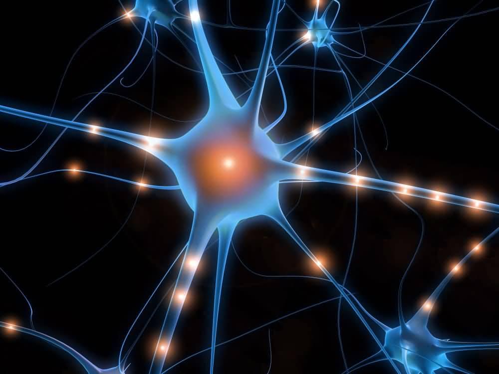 """Ricerche sul cervello: Giacomo Rizzolatti, <br />scopritore dei neuroni specchio, <br />vince """"The Brain Prize"""" 2014. <br />Aveva spopolato su<em>Giannella Channel</em>"""