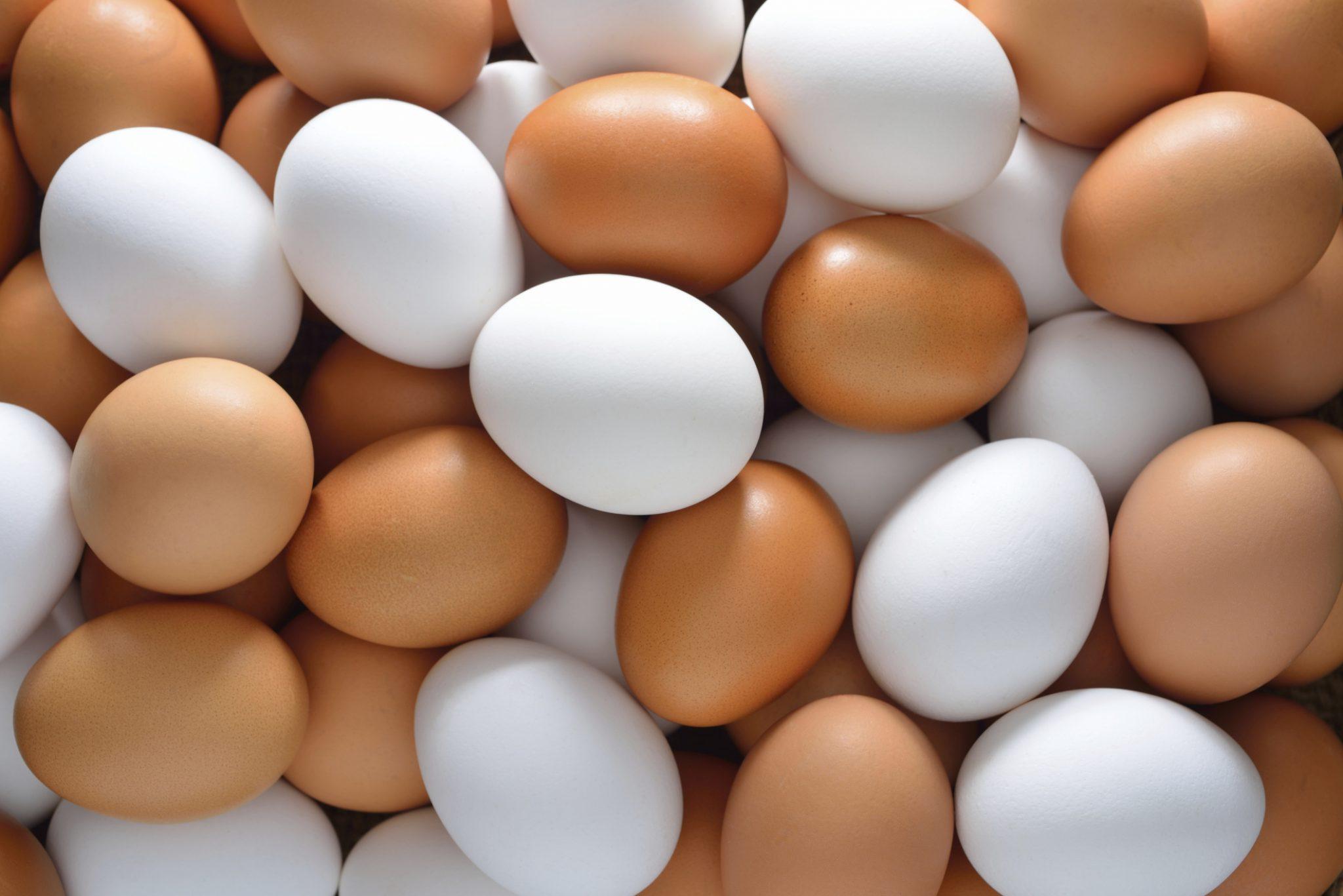 """Expo 2015: sembra facile dire """"energia per la vita"""". Prendiamo per esempio un uovo"""