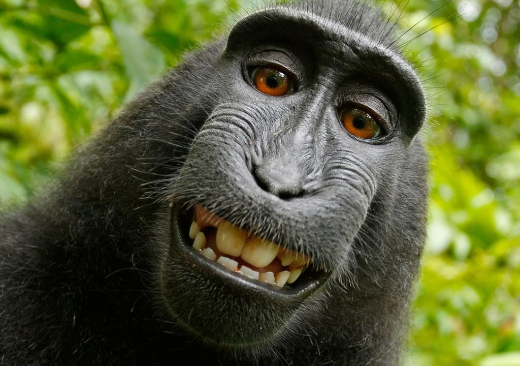 Selfie scattato dal macaco