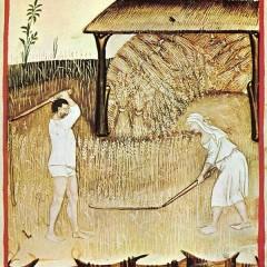 La storia celebra i campi di battaglia nei quali l'uomo ha incontrato la morte, ma non sa raccontarci l'origine del grano