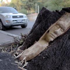 Roma, giovane artista incide i tronchi: così gli alberi morti tornano a vivere