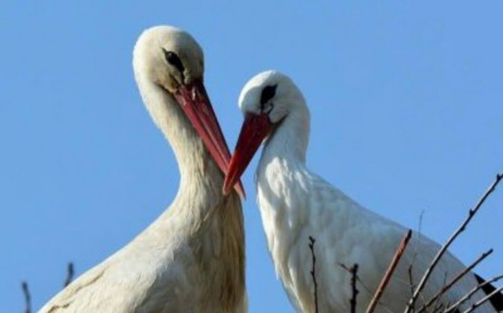 klepetan-malena-love-story-cicogne