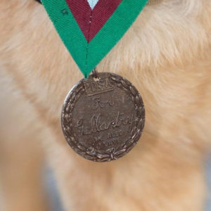 lucca-cane-medaglia-onore