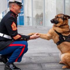 Medaglia d'onore al cane militare che ha perso la zampa in missione