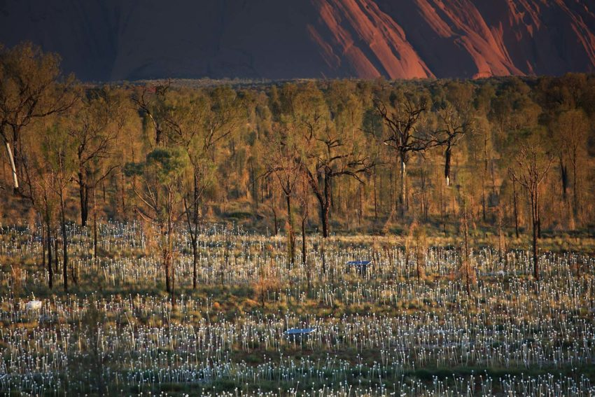 field-of-light-ayers-rock