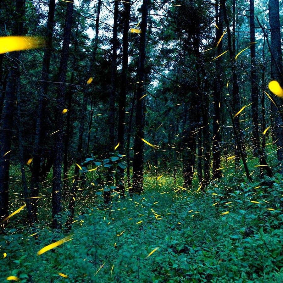 In Messico la magia delle lucciole <br />ferma la deforestazione <br />e lancia il turismo naturalistico