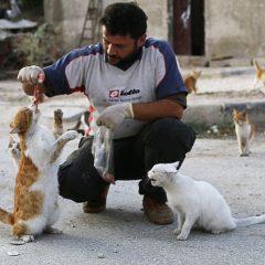 Aleppo: l'uomo che nutre i gatti randagi della guerra