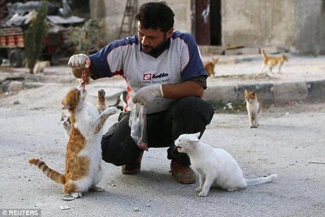 Aleppo: l'uomo che nutre <br />i gatti randagi della guerra