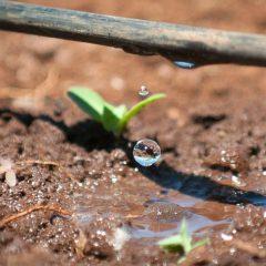 Così Israele nel deserto non resta senz'acqua. Appunti per Roma