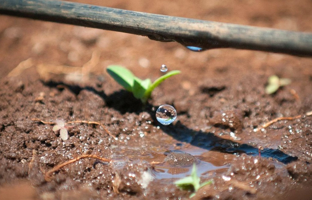 Risultati immagini per irrigazione a goccia