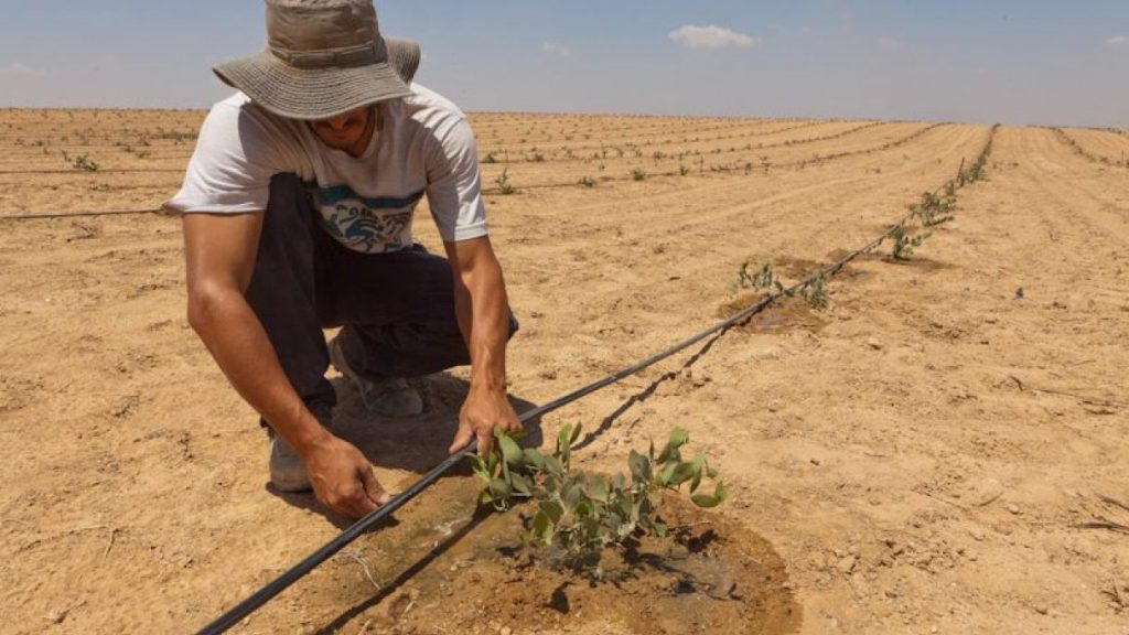 israele-sistema-irrigazione-goccia