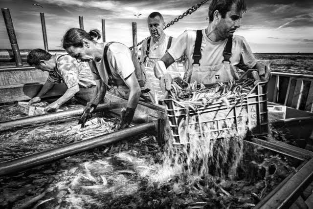 raccolta-pesci-reti-pescatori-cesenatico