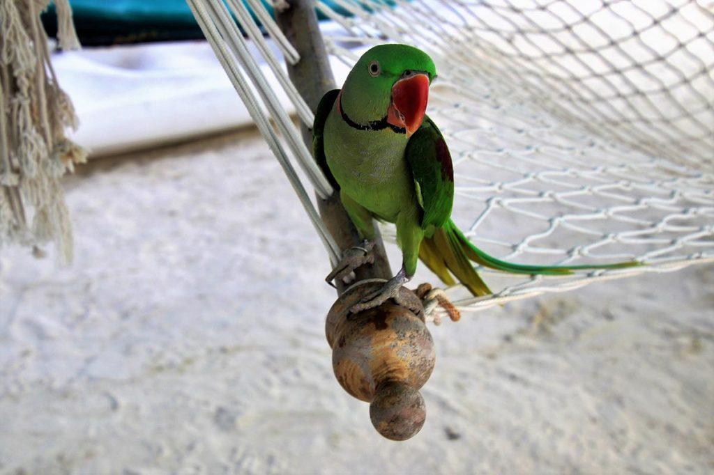 maldive-pappagallo-spiaggia