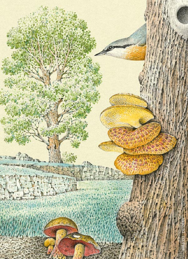 acquerelli-erbolario