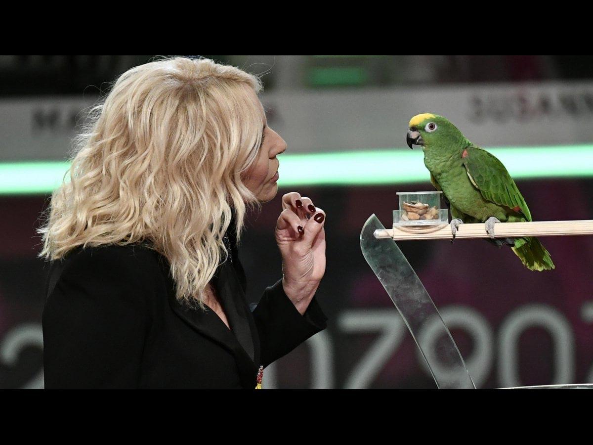 Cara Antonella Clerici, ascolta questa storia <br />(vera) di Schatz, pappagallo siculo-tedesco