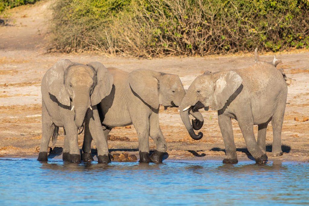 elefanti-savuti-Botswana