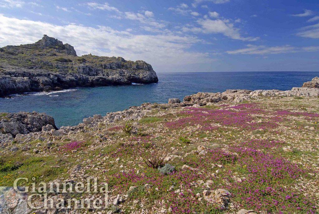 La costa tra Gallipoli e Santa Maria Al Bagno