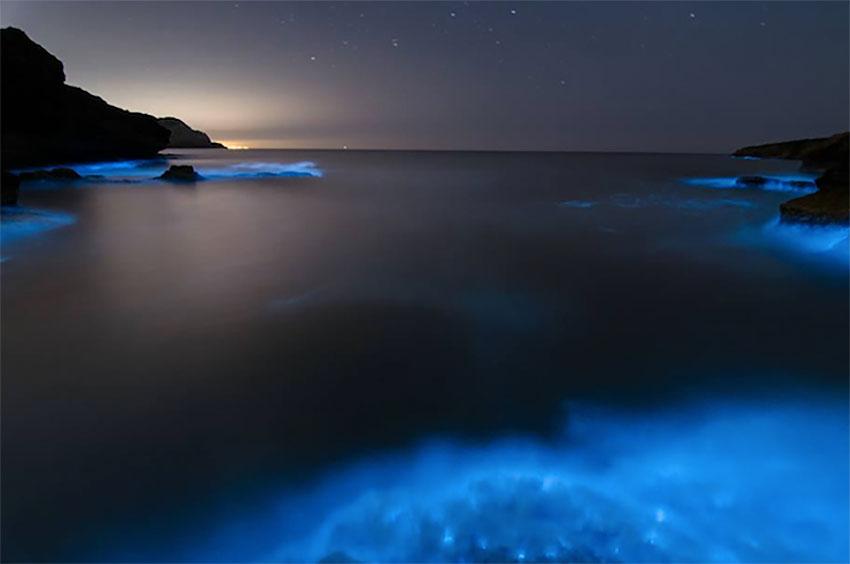 alghe-bioluminescenti-puglia