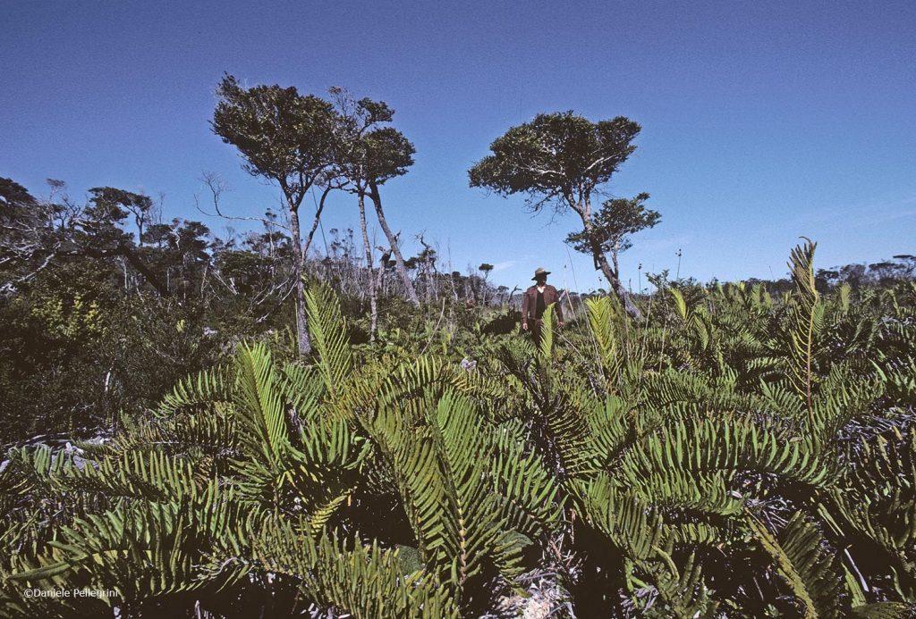 Chiloé, Cile. Parco Nazionale di Chiloé