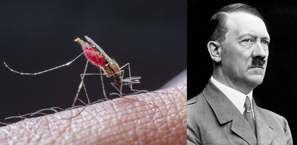 La zanzara-killer, arma segreta con cui il dittatore nazista Adolf Hitler voleva fermare l'avanzata degli angloamericani nell'Agro Pontino
